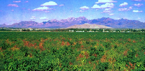 The Worlds finest chile - grown in Hatch, New Mexico